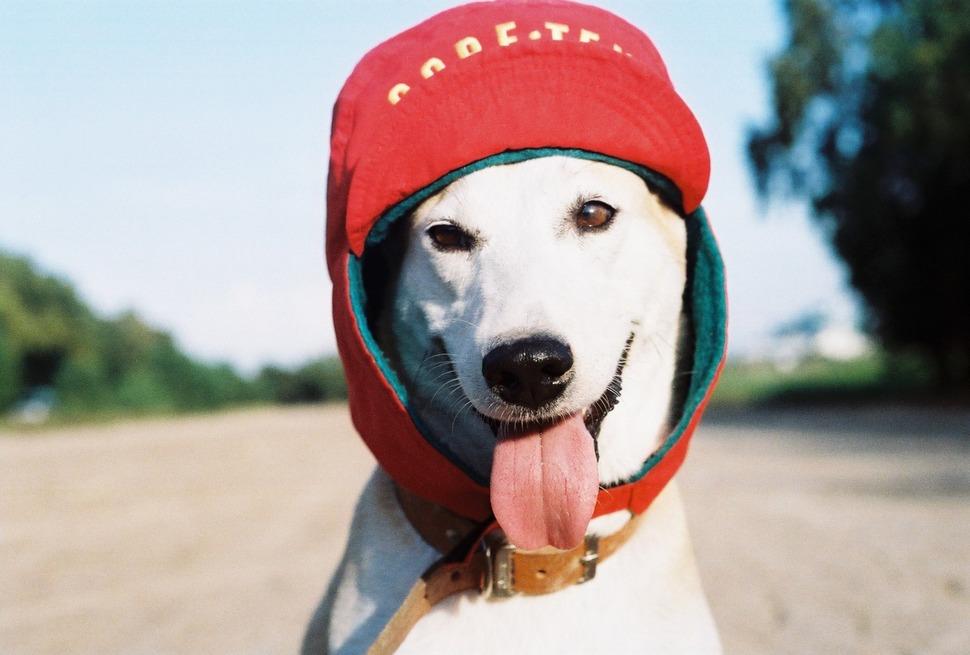 perro_feliz_7