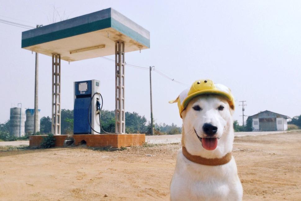 perro_feliz_9