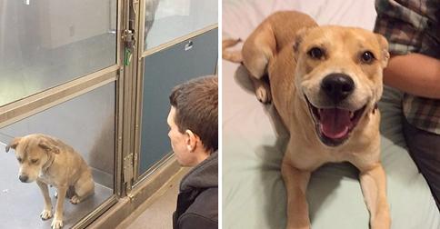 perros-adoptados-antes-despues