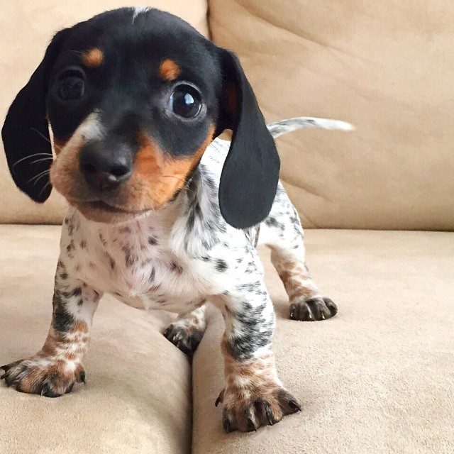 perros_4