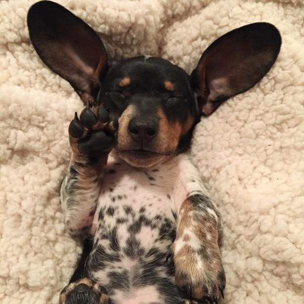 perros_7