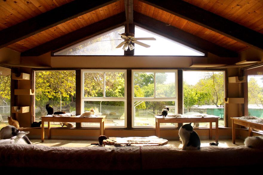 santuario gatos 1