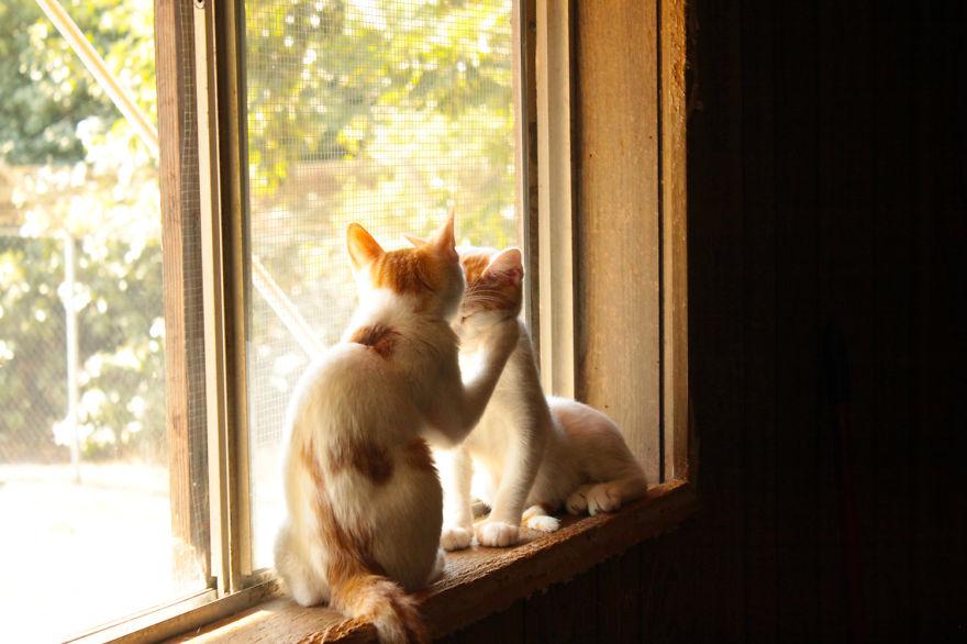 santuario gatos 11