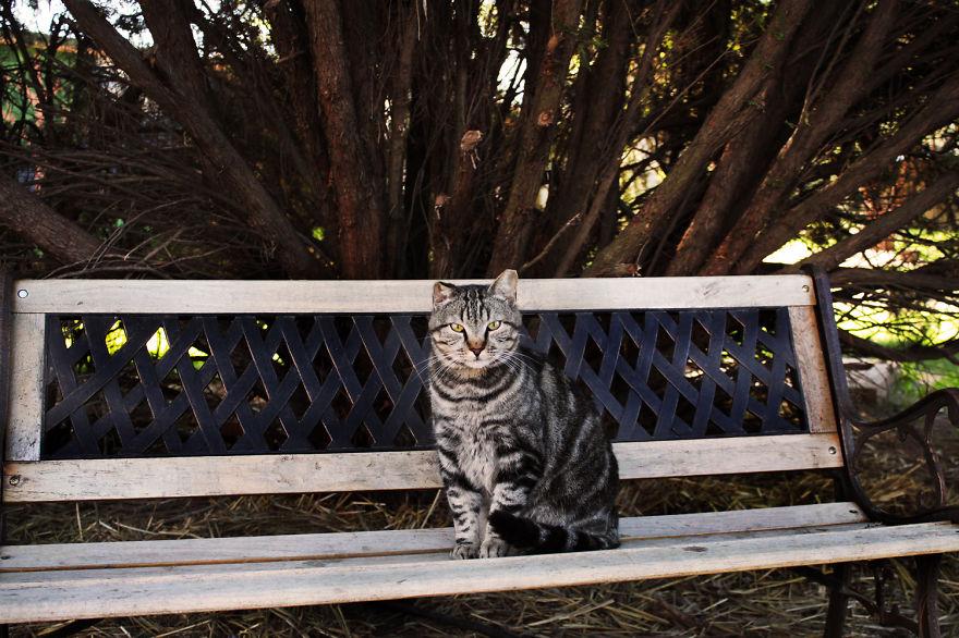santuario gatos 12