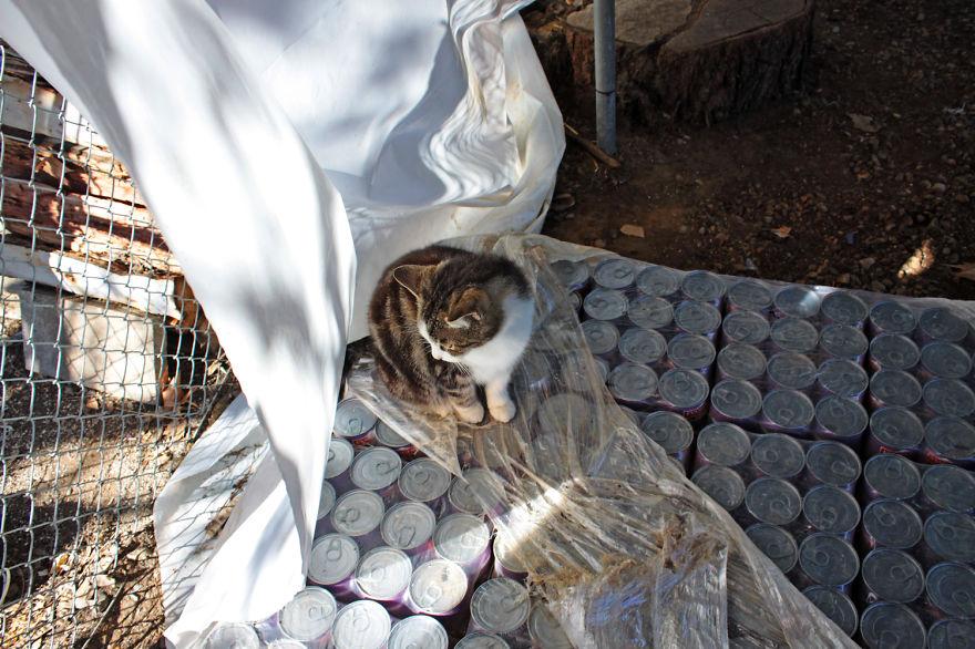 santuario gatos 14
