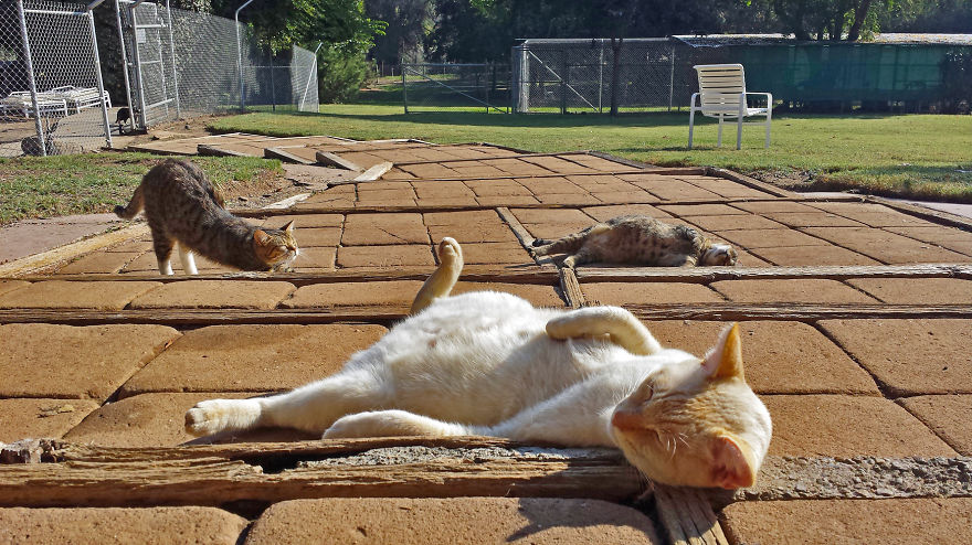 santuario gatos 2