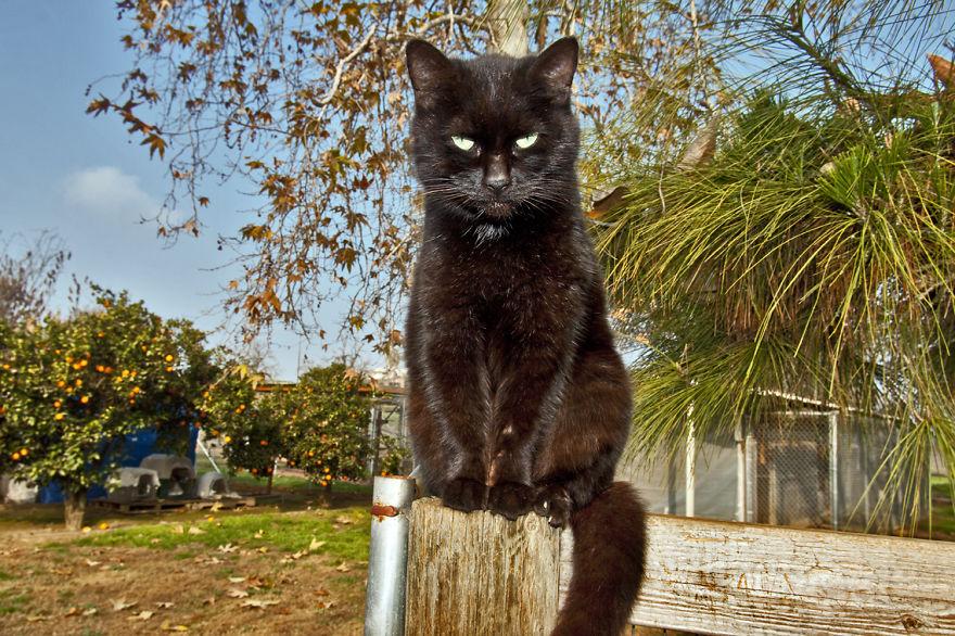 santuario gatos 3