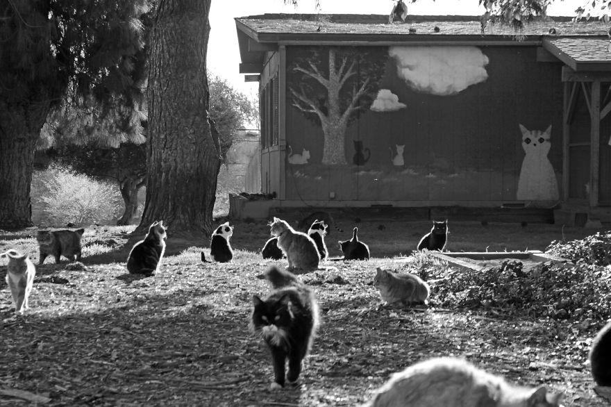 santuario gatos 4