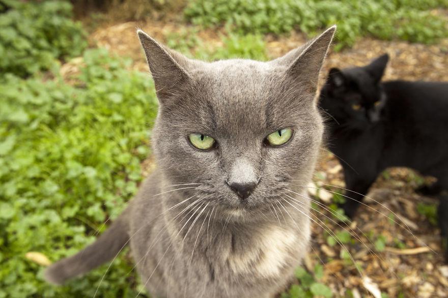 santuario gatos 5