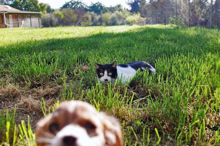 santuario gatos 6