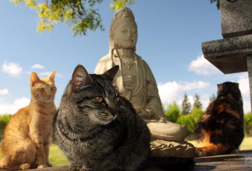 santuario gatos 7