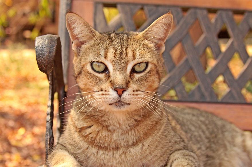 santuario gatos 8