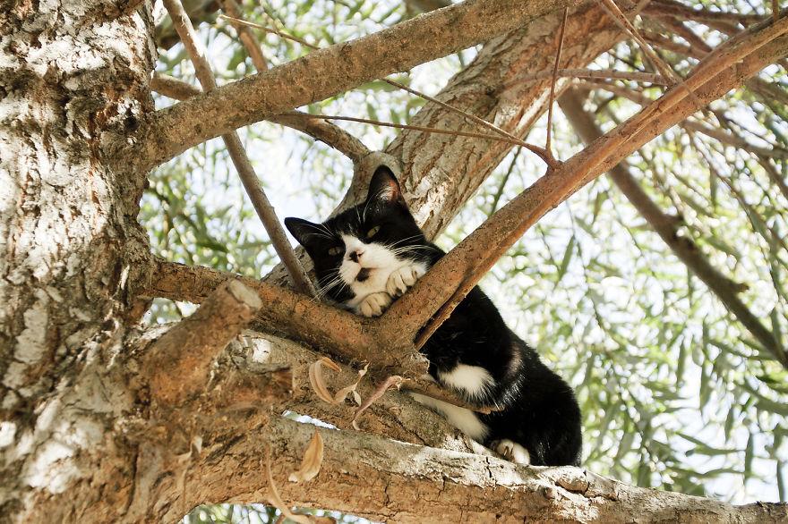 santuario gatos 9