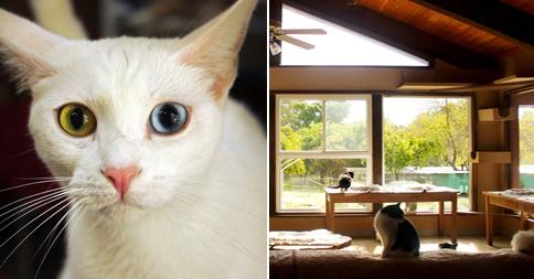 santuario-gatos