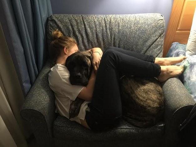 ultimos dia de su perro 9