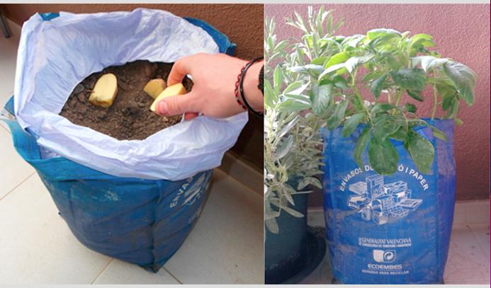 vegetales_comprar_una_vez_10