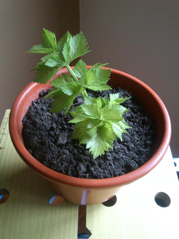 vegetales_comprar_una_vez_16