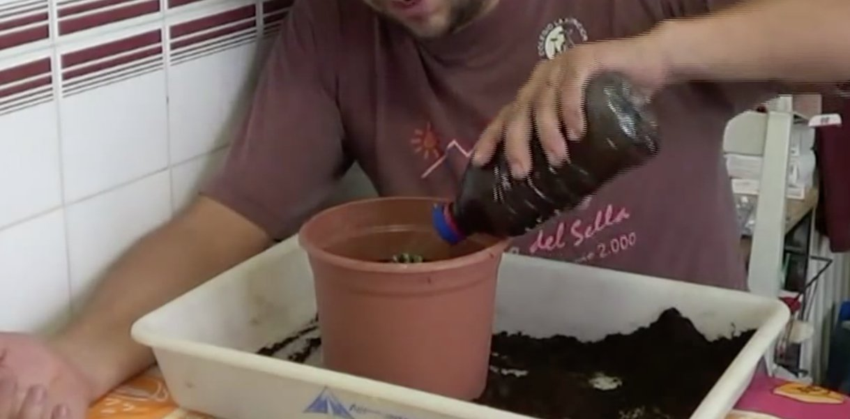 vegetales_comprar_una_vez_17