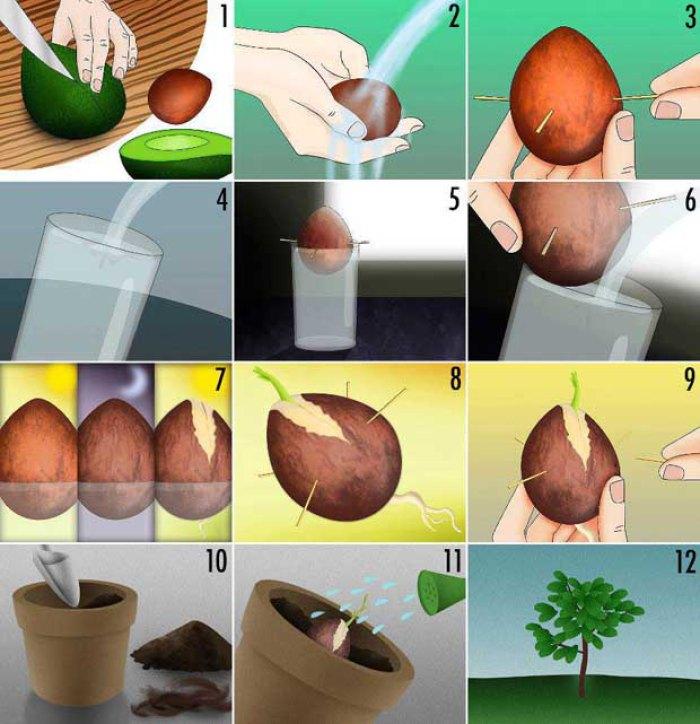 vegetales_comprar_una_vez_6