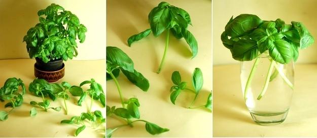 vegetales_comprar_una_vez_9
