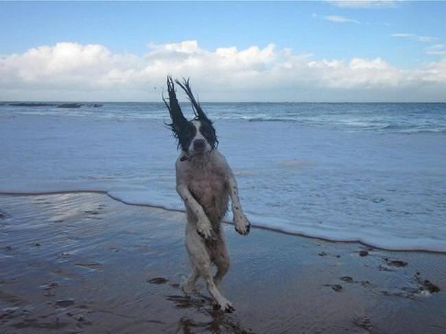 28_fotos_perros_dificiles_explicar_18