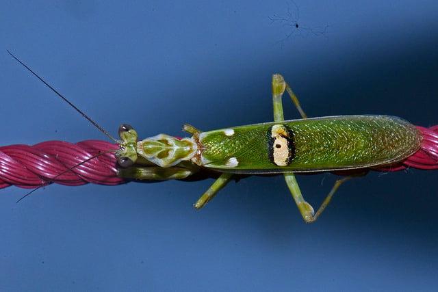 Flickr: Vijay Anand Ismavel