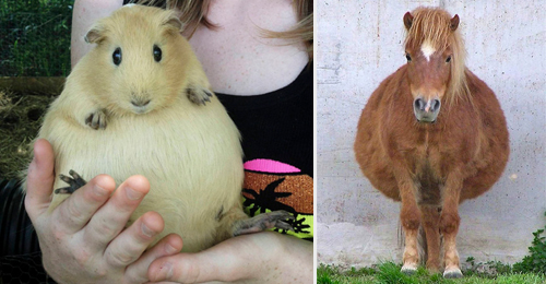 animales-embarazados