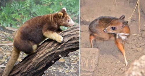 28 Animales En Peligro De Extinción Que Quizás No Vuelvas A Ver La