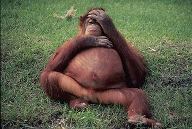 animales_embarazados_11