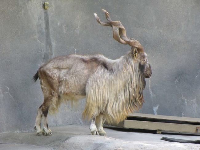 animales_peligro_extincion_28