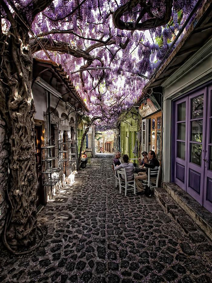 calles-flores15