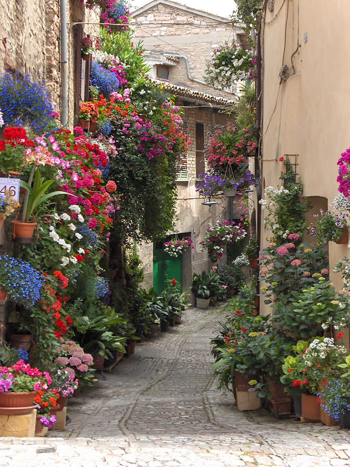 calles-flores07