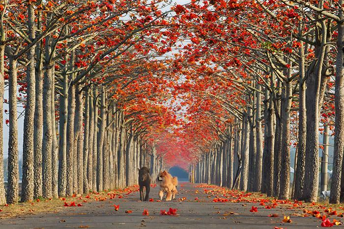 calles-flores06