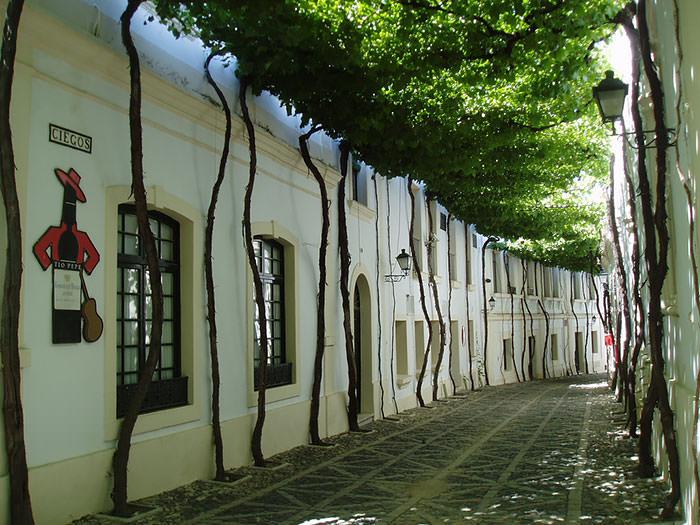calles-flores04