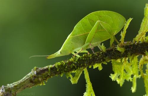 camuflaje de insectos 15