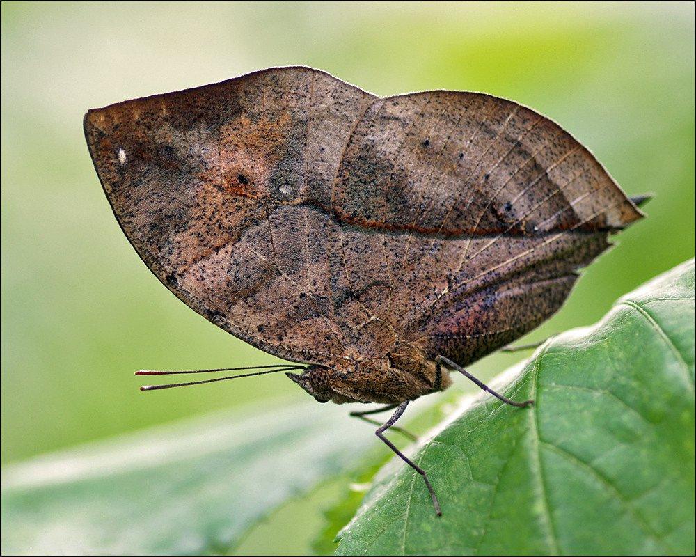 camuflaje de insectos 17