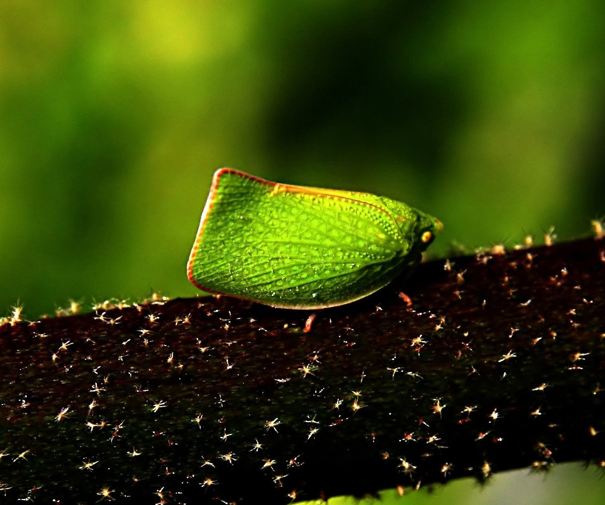 camuflaje de insectos 19