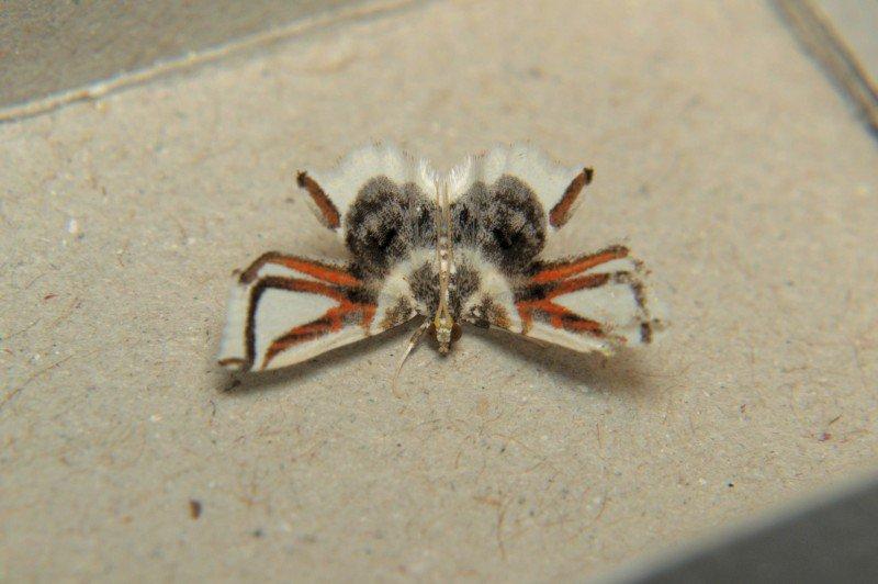 camuflaje de insectos 2