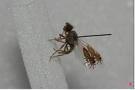 camuflaje de insectos 20