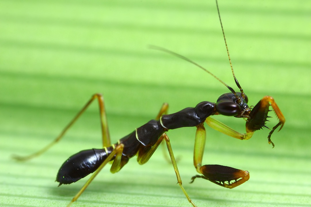camuflaje de insectos 21