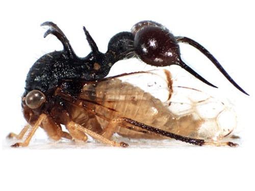 camuflaje de insectos 22