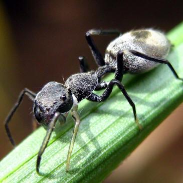 camuflaje de insectos 23