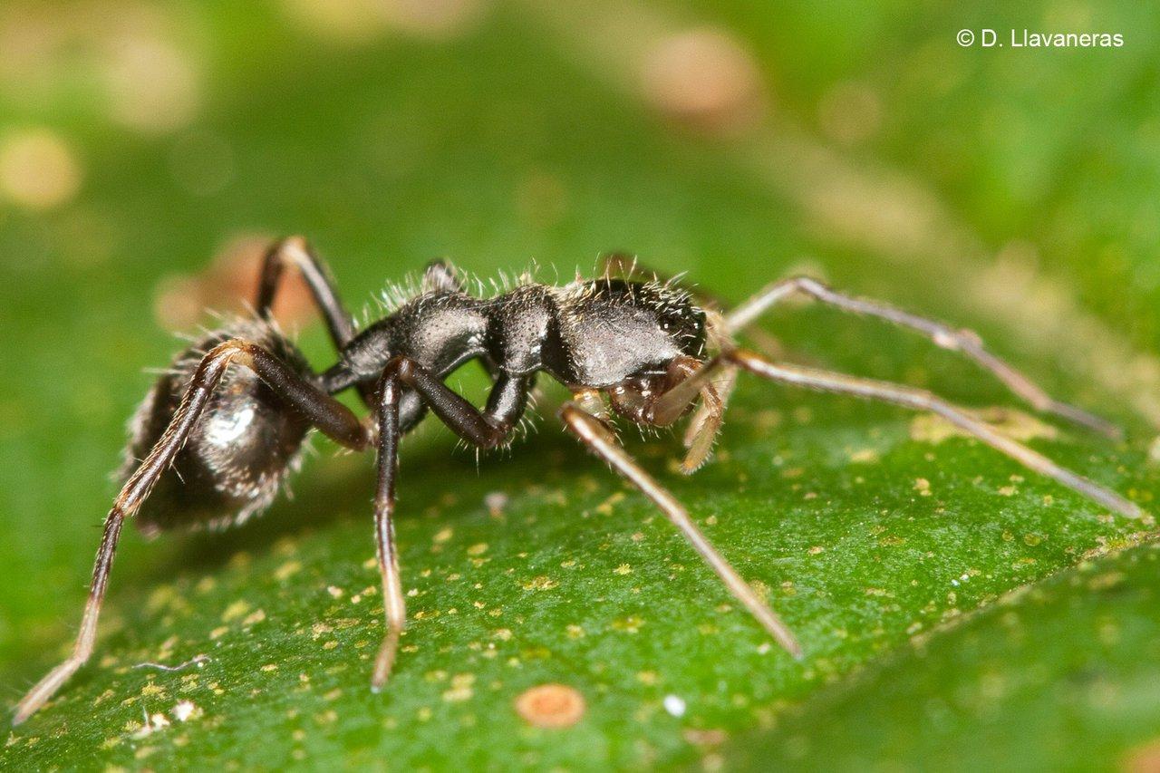 camuflaje de insectos 24