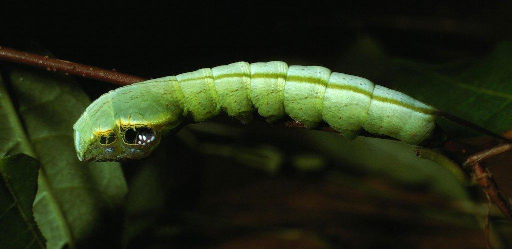 camuflaje de insectos 29