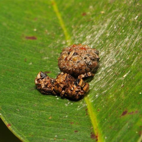 camuflaje de insectos 4