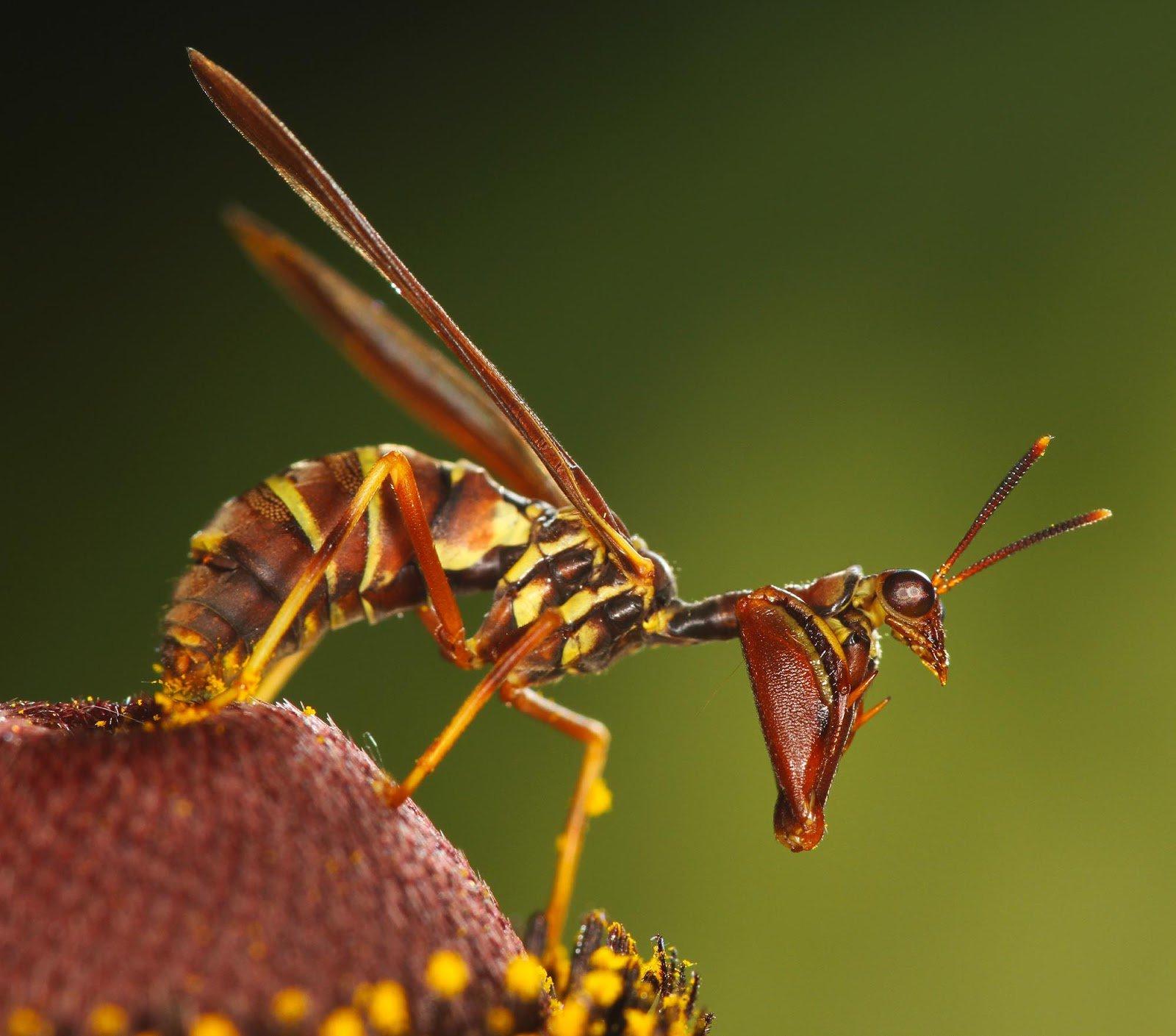 camuflaje de insectos 6