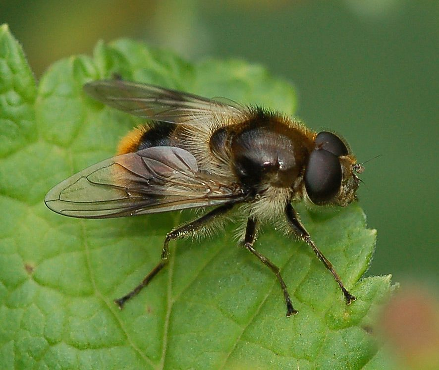 camuflaje de insectos 9