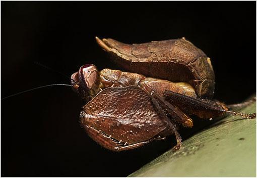 conoce-5-mantis-mas-bonitas-del-planeta-curio-L-WANlE4