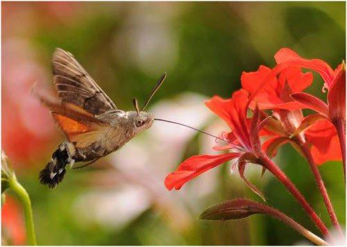 20 Insectos increíbles que imitan el aspecto de otros.