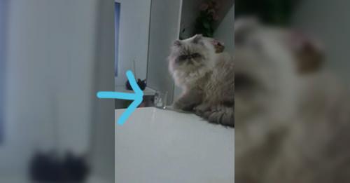 gato-malo